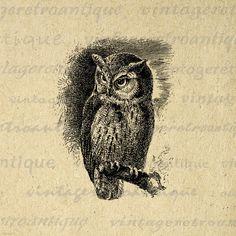 Printable Graphic Screech Owl Image Bird Digital Illustration Download Antique Clip Art for Transfers etc HQ 300dpi No.3046 via Etsy