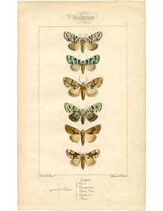Vintage French Moth Printable! - The Graphics Fairy