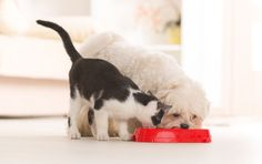 There are several dozen ingredients in your average dog or cat food, find out what's important.