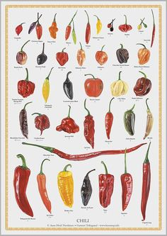 plakat i - chili Vintage Botanical Prints, Botanical Drawings, Botanical Illustration, Garden Illustration, Fruit And Veg, Fruits And Vegetables, Chile Picante, Chili, Food Charts