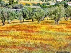 Landscapes in Alentejo (Évora) by Vítor Laranjeiro on 500px