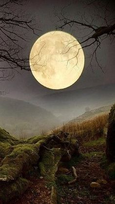 Forest Moon, Wales via Amazing Photos in the World Moon Moon, Luna Moon, Moon Art, Big Moon, Moon Shadow, Sombra Lunar, Moon Dance, Shoot The Moon, Moon Pictures