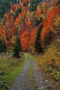 Autumn Drive - Vrancea, Romania