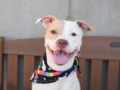 PRADA - A1088976 - - Brooklyn Please Share:TO BE DESTROYED 09/23/16 ** AWESOME…