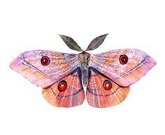 Moth original lacy watercolor art work on TEVA, size Illustrations, Illustration Art, Posca Art, Bug Art, Insect Art, Blue Butterfly, Tattoo Sketches, Art Inspo, Watercolor Art