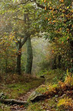 Jeffrey Logesky (USA)- Forest