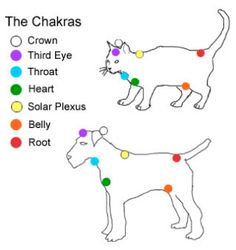 Dog & Cat Chakras