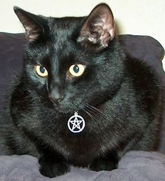 Witch's Familiar Cat Collar with Sterling Silver Charm - Pentacle or Triple Knot