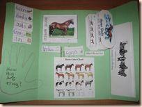 Horses Lapbook | Confessions of a Homeschooler