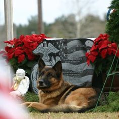 Lex (E132) German Shepherd, Military Working Dog U.S. Marine Corps (Ret.) Laying next to the grave of his Master  and loyal partner Corporal Dustin Jerome Lee, 20 year old U.S. Marine Corps canine handler from Mississippi. KIA Iraq..