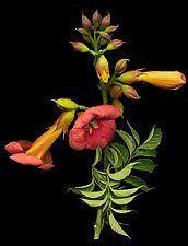 Color Photograph by Raphael Sloane