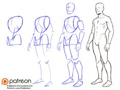 Human Figure Drawing Reference kibbitzer is creating Reference sheets, tutorials and Human Figure Drawing, Figure Drawing Reference, Art Reference Poses, Anatomy Reference, Cat Reference, Anatomy Sketches, Body Sketches, Body Anatomy, Anatomy Art