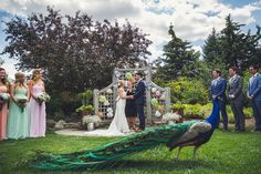 Peacock PHOTO BOMB during the wedding ceremony at The Calgary Zoo! Love this amazing outdoor wedding by Calgary wedding photographer Anna Michalska. Check the article link for more!