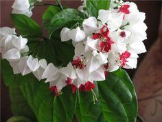 Быстрорастущие комнатные цветы - Дом - LADY.tsn.ua