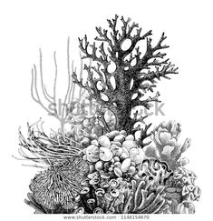 Arte Coral, Coral Art, Ocean Theme Tattoos, Coral Reef Drawing, Thor Hammer Tattoo, Coral Tattoo, Pirate Skull Tattoos, Underwater Art, Fish Sculpture