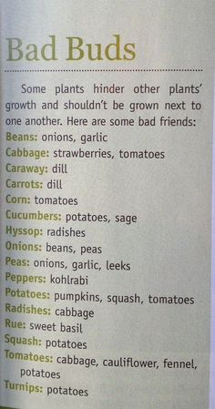 Urban Farm Mag: Garden plants that do NOT grow well next to each other.