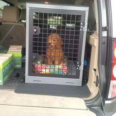 #cockerpoo travels safely in #transk9 #dogtransit #cage #crate #discovery4 #accessory www.transk9.com