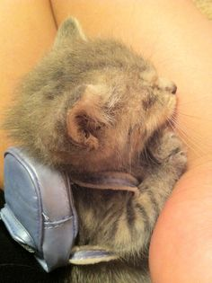 OMG. It's a tiny kitten wearing a tiny backpack.