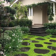 A green and white garden is classical and works beautifully here in Glen Iris, Vic. Design and pic by Ground cover is native Dichondra repens . Melbourne Garden, Classic Garden, Ground Cover Plants, White Gardens, Potted Plants, Landscape Architecture, Lush, Entrance, Garden Design