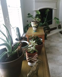 The Ultimate Houseplant Guide. House PlantsLiving Room ...