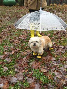 Dog Umbrella. Pet Umbrella. Custom Umbrellas by ButterMakesMeHappy - I love this idea