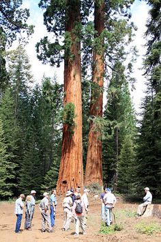 25 Years of Controversy amid the Monarchs. http://blog.savetheredwoods.org/category/futures/