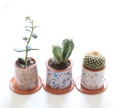Small Cacti Planters via www.babasouk.ca