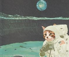 Space CatDet the Ninth
