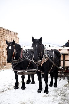 Gorgeous Photo of Team of Horses Cattle Ranch | boxwoodavenue.com