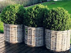 Simplify patio garden next year? So simple and clean. Simplify patio garden next year? So simple and clean. Dream Garden, Home And Garden, Wicker Planter, Wicker Baskets, Basket Planters, Boxwood Planters, Deck Planters, Boxwood Topiary, Wicker Purse