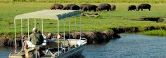 A lovely game viewing & camping adventure in Chobe National Park is waiting for you! Choose one of our Chobe packages to spend your time in extreme wilderness. Safari Adventure, Adventure Tours, Chobe National Park, National Parks, Best Tourist Destinations, How To Memorize Things, Things To Come, Field Museum, Victoria Falls