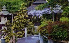 Postcard 1954 Japanese Tea Garden Golden Gate Park San Francisco CA California