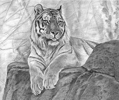 Nice Tiger drawing Pencil Drawings Of Animals, Realistic Pencil Drawings, My Drawings, Tiger Sketch, Tiger Drawing, Japanese Tattoo Art, Cat Coloring Page, Nature Artists, Drawing Projects