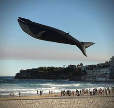 Flying Whale WIN
