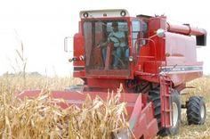 harvesting corn #farming #combine
