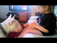 #BestFriendsForever-Girl Feeds English Bull Terrier - YouTube