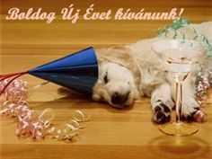 8 Adorable Photos Of Animals Celebrating With Champagne Happy Birthday Dog, Tgif, Dogs And Puppies, Cute Pictures, Champagne, Old Things, Pets, Celebrities, Animals