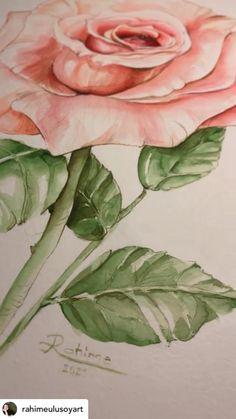 Watercolor Art Lessons, Watercolor Drawing, Watercolor Rose, Watercolor Illustration, Watercolor Paintings, Floral Paintings, Watercolors, Art Drawings, Rose Drawings