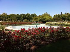 San Jose Rose Garden- Lily says it's right next to the park :)