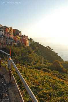 Corniglia Sun, Cinque Terre, Italy