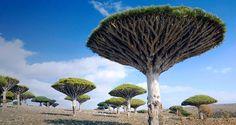 Socotra Archipelago Yemen
