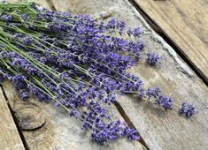 Free Image on Pixabay - Lavender, Blue, Purple, Blue Flower Free Pictures, Free Images, Lavender Blue, Blue Flowers, How To Dry Basil, Purple, Solution, Gardening, Blue Nails