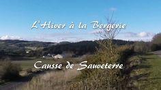 La vie dans les bergerie à l'automne sur le Causse de #Sauveterre, en #lozère. De jolis petits #agneaux,  du fromage.... http://fromage-le-levejac.com  #lacaune #fromages #fromages de brebis