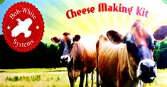 Need a holiday gift idea? Cheese Making Supplies, Milk And Cheese, Artisan Cheese, Cheese Cloth, How To Make Cheese, Holiday Gifts, Cow, This Is Us, The Incredibles