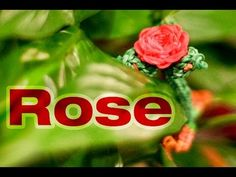 Rainbow Loom 3D VALENTINES ROSE Charm - Advanced. Designed and loomed by Rob at justinstoys. Click on photo for YouTube tutorial.