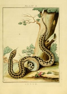 Verhandeling over de slangen en adders die in het landschap Drenthe gevonden worden : - Biodiversity Heritage Library