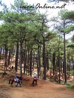 Horseback riding among pine trees only in Baguio. Horseback riding among pine trees only in Baguio. Baguio City, Diy Outdoor Furniture, Outdoor Venues, Hydroponic Gardening, Diy Patio, Types Of Plants, Pine Tree, Small Gardens, Horseback Riding