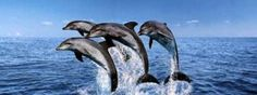 I love the Outer Banks. Such beautiful sights, and the dolphin tours are excellent! www.hatterasfishingcaptain.com