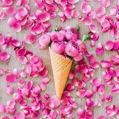 The Rose Garden : Photo