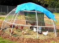 Chicken tractor built the same size as a series of garden beds, so you can rotate the chickens every 2 weeks. #permaculture